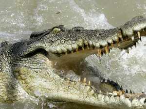 Croc grabs man by leg, tries to drag him away