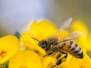 You can use your phone to join global campaign to save bees
