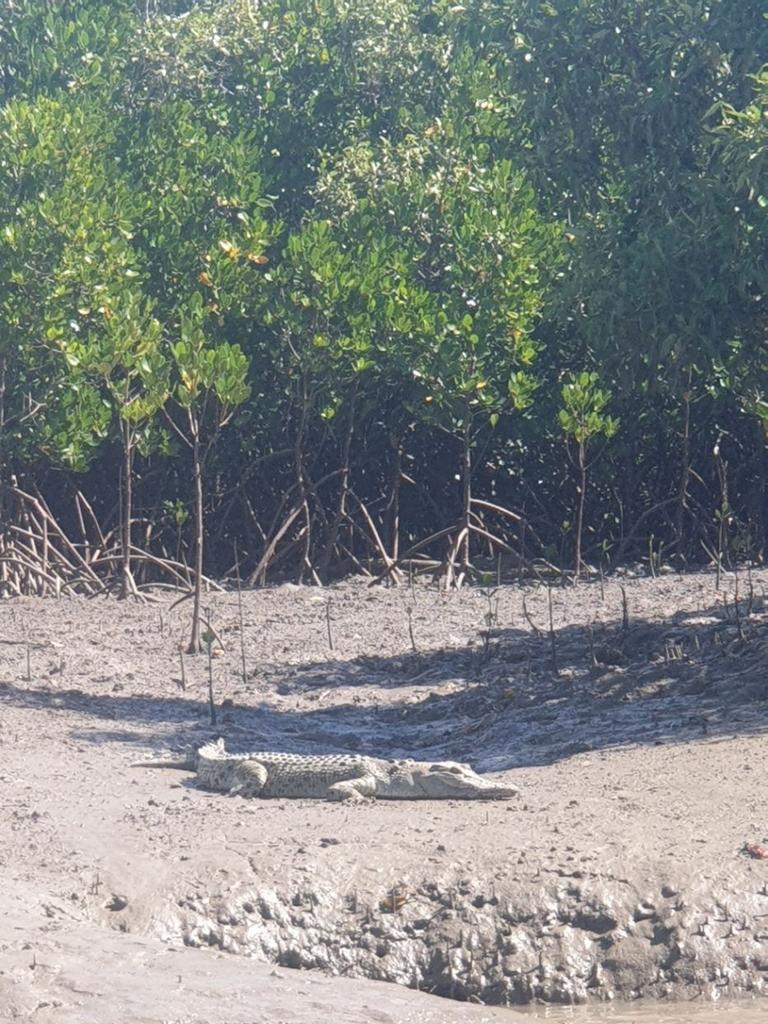 A croc spotted on Horton's Creek during Ray Anes' recent fishing trip