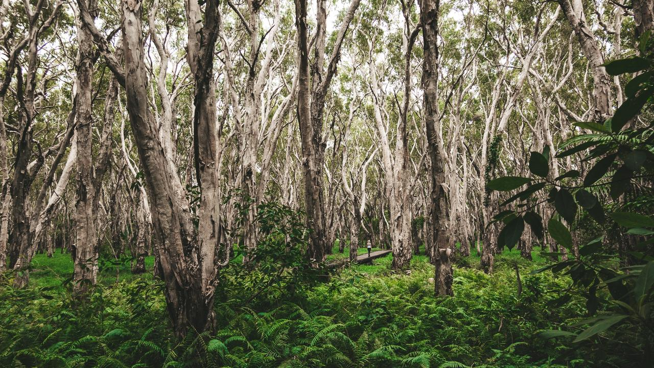 The Kommo Toera Trail off Keeleys Rd winds through towering Melaleuca trees. Contributed: Mackay Tourism