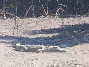 Croc 'snapped' at a popular CQ fishing spot