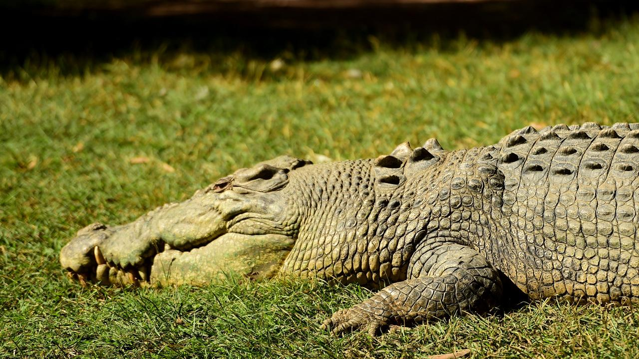 The Department of Environment and Science says there is no evidence crocodiles are moving south into the Fraser Coast. PHOTO: File.