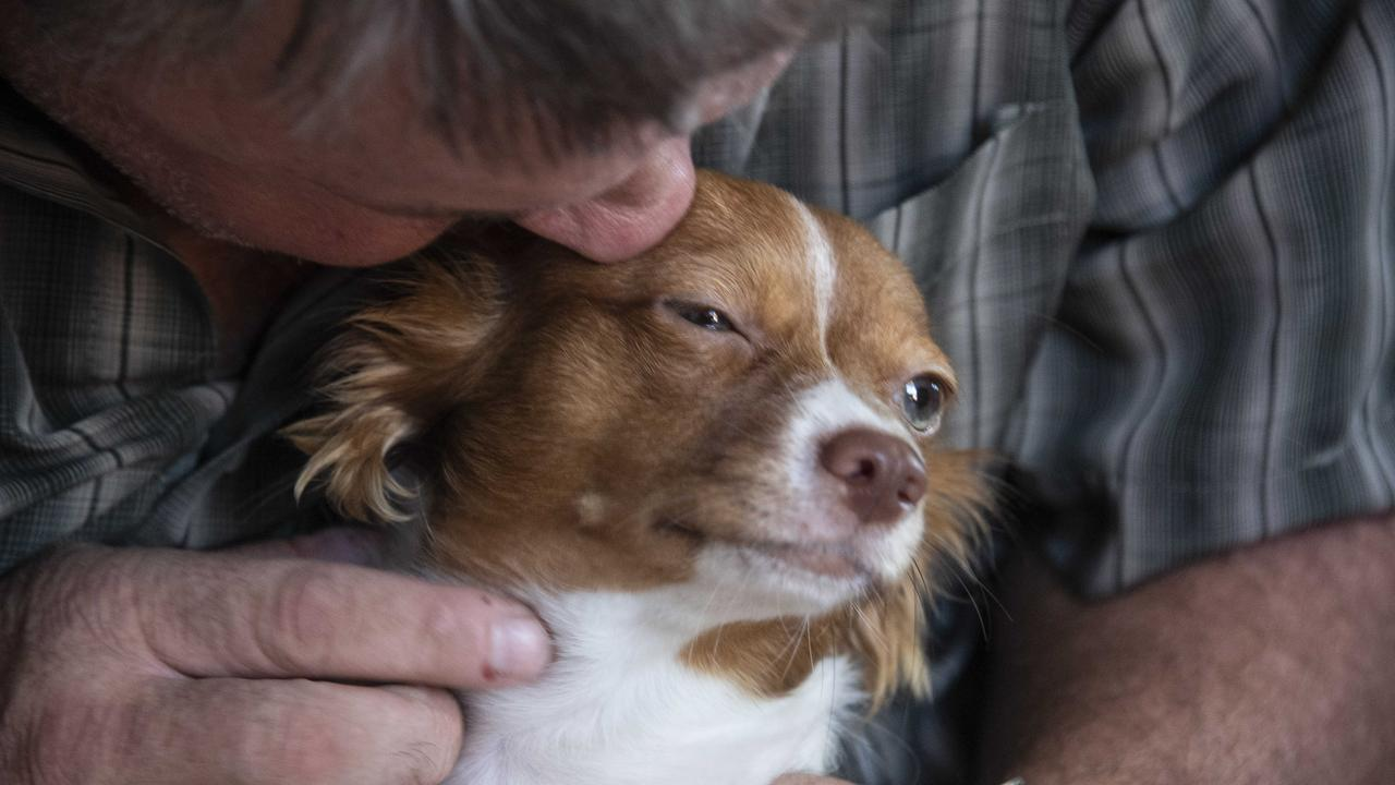 Stephen Scarlett says Muni is the bravest dog he's ever come across. Picture: Brian Cassey