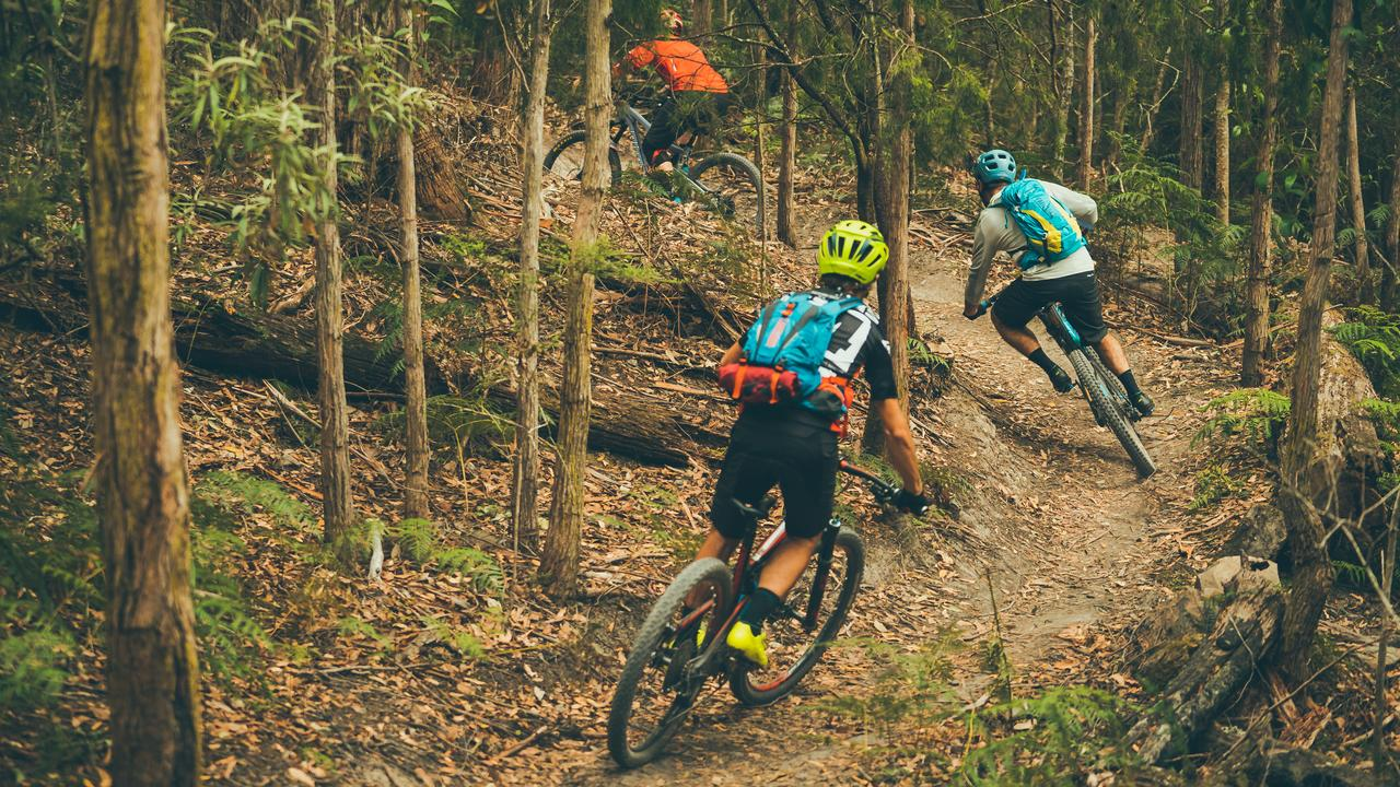 Rogue mountain bike riders have vandalised conservation zones, carving out new tracks and brazenly restoring tracks closed by authorities.