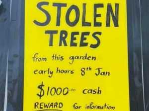 PLANT-ING EVIDENCE: Noosa man's unusual garden dilemma