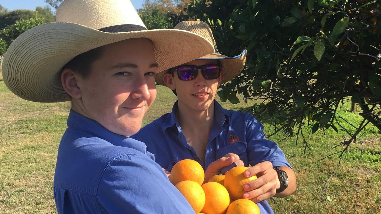 Rockhampton Grammar School agriculture students Maddix Lovett, left, and Ben Hinman harvested a 600kg citrus donation to Rockhampton Food Bank in 2019, at the school's Port Curtis farm.