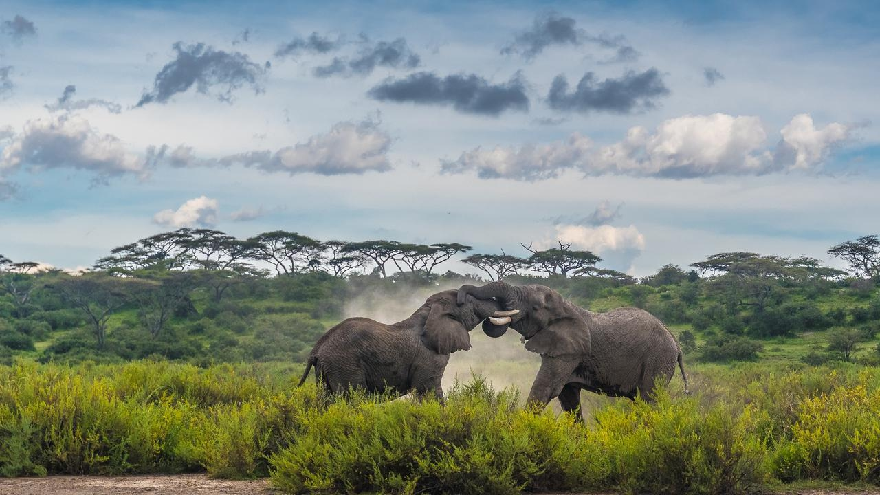 Clash Of The Titans ,Ndutu Conservation Area, Tanzania. Picture: Zhayynn James /The EPSON International Pano Awards 2019
