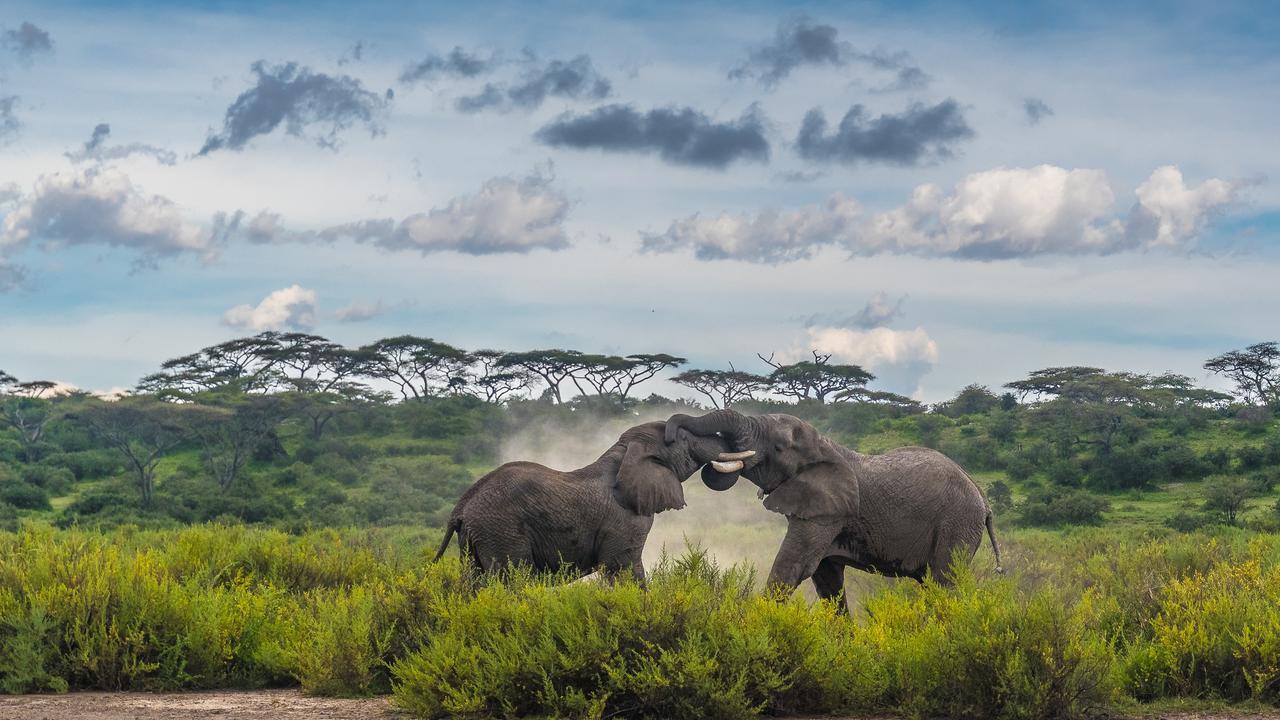 Clash Of The Titans ,Ndutu Conservation Area, Tanzania. Picture:Zhayynn James /The EPSON International Pano Awards 2019