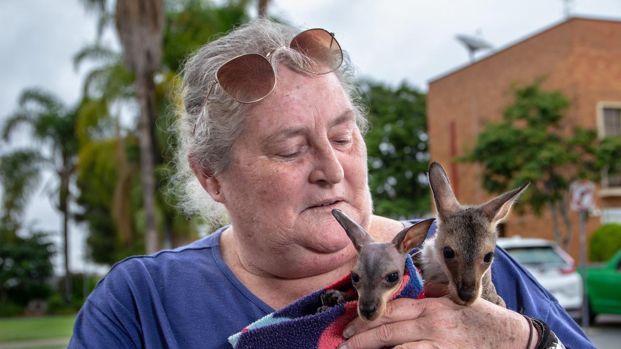 Wildlife carer Kathy Silk with kangaroo joeys.