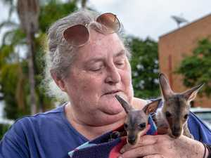 Easing of restrictions puts animal lives on the line