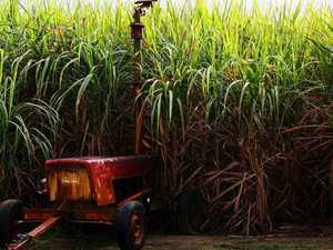 Region part of sugar industry research projects