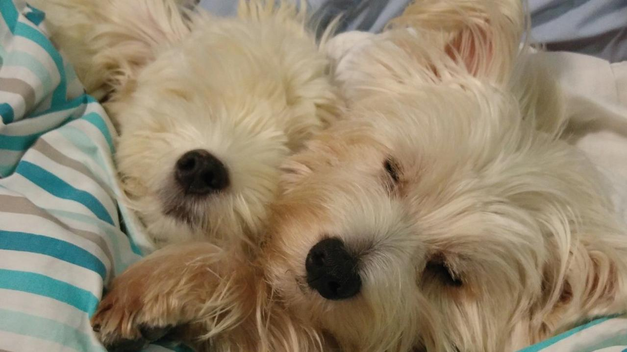 Terese Turner's beautiful boys Hamish and Bentley were both adopted from Capricorn Animal Aid.