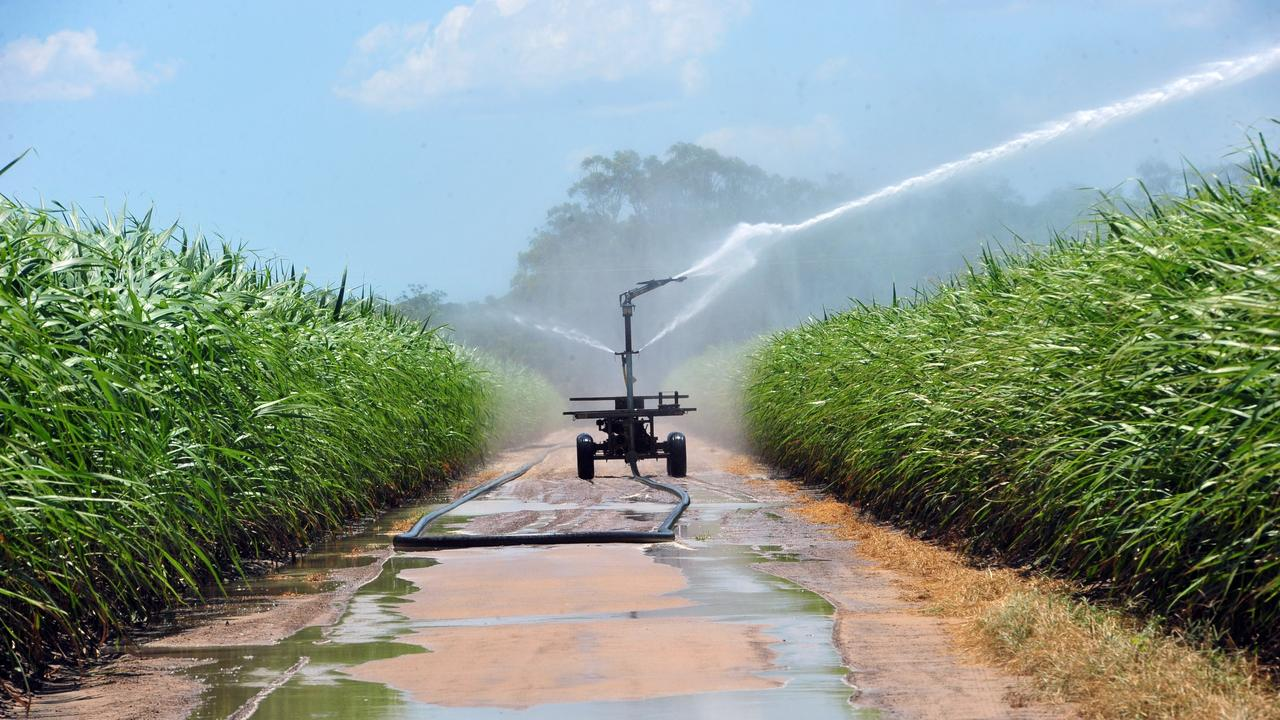 Industrial size sprinklers irrigate a cane farm.