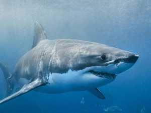 New pro-shark film to 'shame' Palaszczuk Government