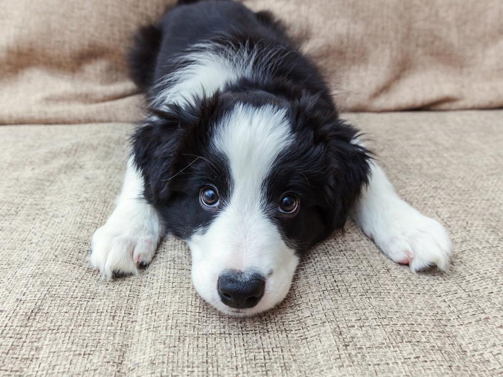 The winner of Ipswich's cutest pet
