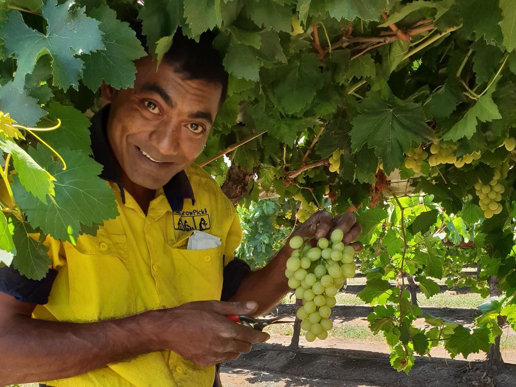VITAL: Seasonal workers including people in seasonal worker programs and backpackers are essential to pick, prune and harvest the region's crops.
