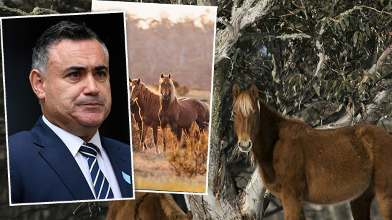 More than 4000 brumbies in the Kosciuszko National Park will be rehomed or killed to help native wildlife recover from devastating bushfires.