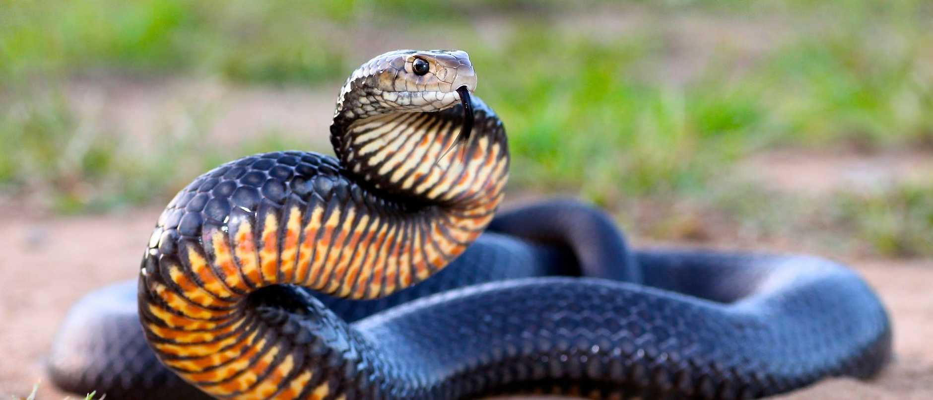 Two women have been hospitalised after suffering snake bites to their feet and legs.