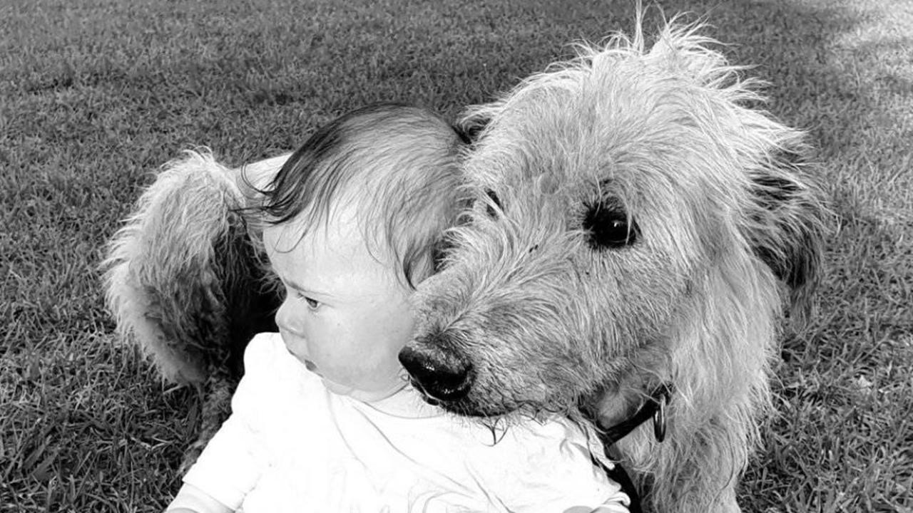 Australian Staghound, Teddy with Hadley Stockwell, 5 months