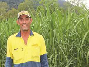 Mackay cane farmers prepare for crushing season
