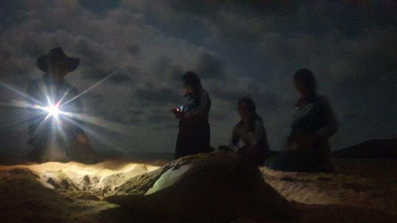 Turtle nesting ground on the Capricorn Coast