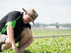Harvest worker shortage revoked amid mass virus job losses