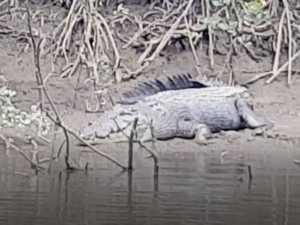 WATCH: Monster croc stuns onlookers at Constant Creek