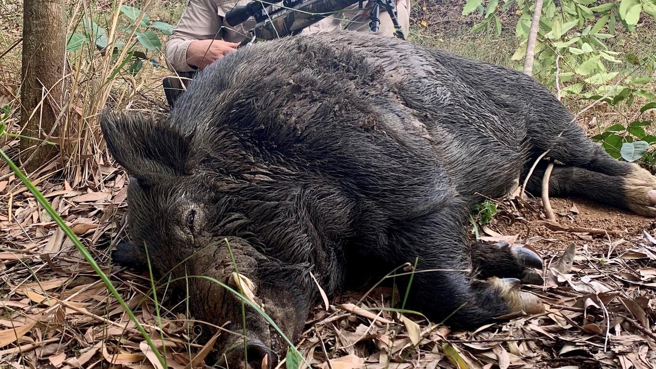 Adam Rijken captured and killed a huge wild boar on a Cooran farm.