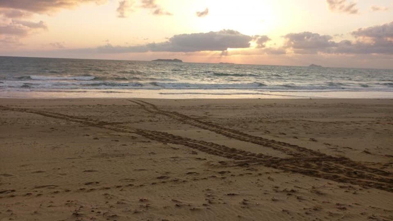 Turtle tracks spotted by Team Turtle Central Queensland
