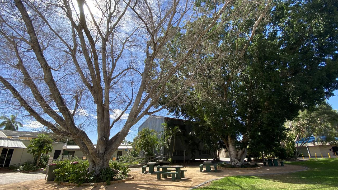 FIG TREE: The tree by the Emerald library that is to be felled.