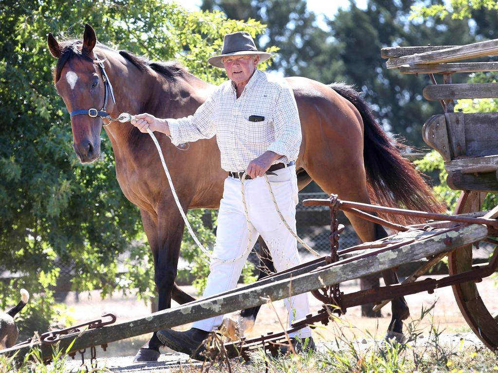 """Trainer Terry Kelly says Skelm is """"more like our pet dog than a horse""""."""