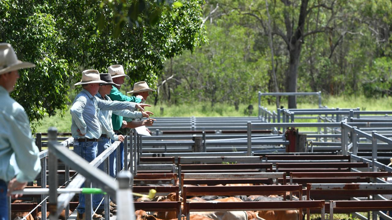Auctioneers at the Miriam Vale cattle sale on February 21, 2020.