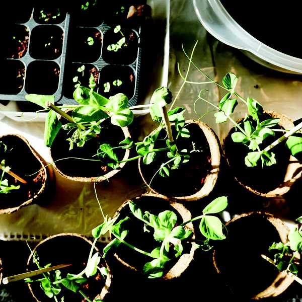 Get your green thumb on this winter!