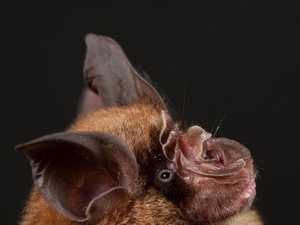 Virus most likely came from Asian bat
