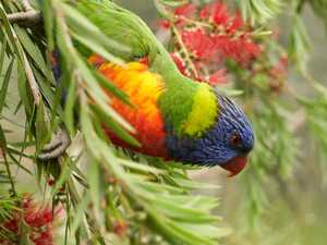 Three infected with rare 'parrot fever'