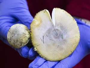 Warning issued over deadly mushrooms