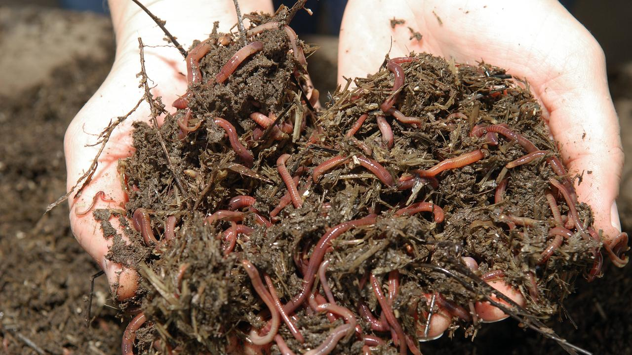 South Burnett Regional Council is offering virtual workshops to teach you how to establish a worm farm and save your food scraps from landfill. Photo: File