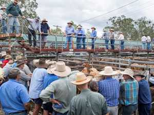Five-legged cow causes a stir at Gympie cattle sale