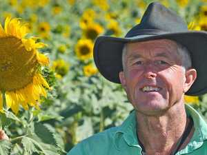 Gympie region farmer shares the love with free sunflowers