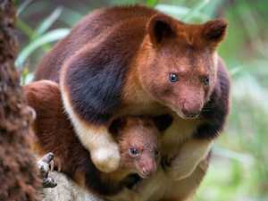 Australian zoos hit with adorable baby boom