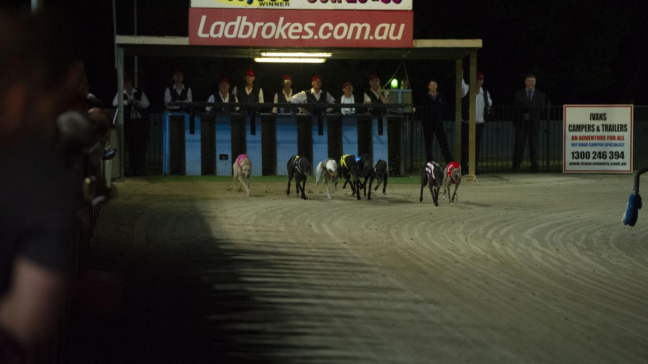 BACK RUNNING: Greyhound racing has returned to Lismore in recent weeks under COVID-19 restrictions. Contributed