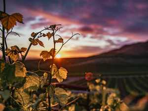 Scenic region is bliss for wine lovers