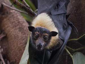 CBD bat relocation plan given federal go ahead