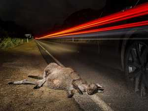 Man in hospital after crashing into kangaroo