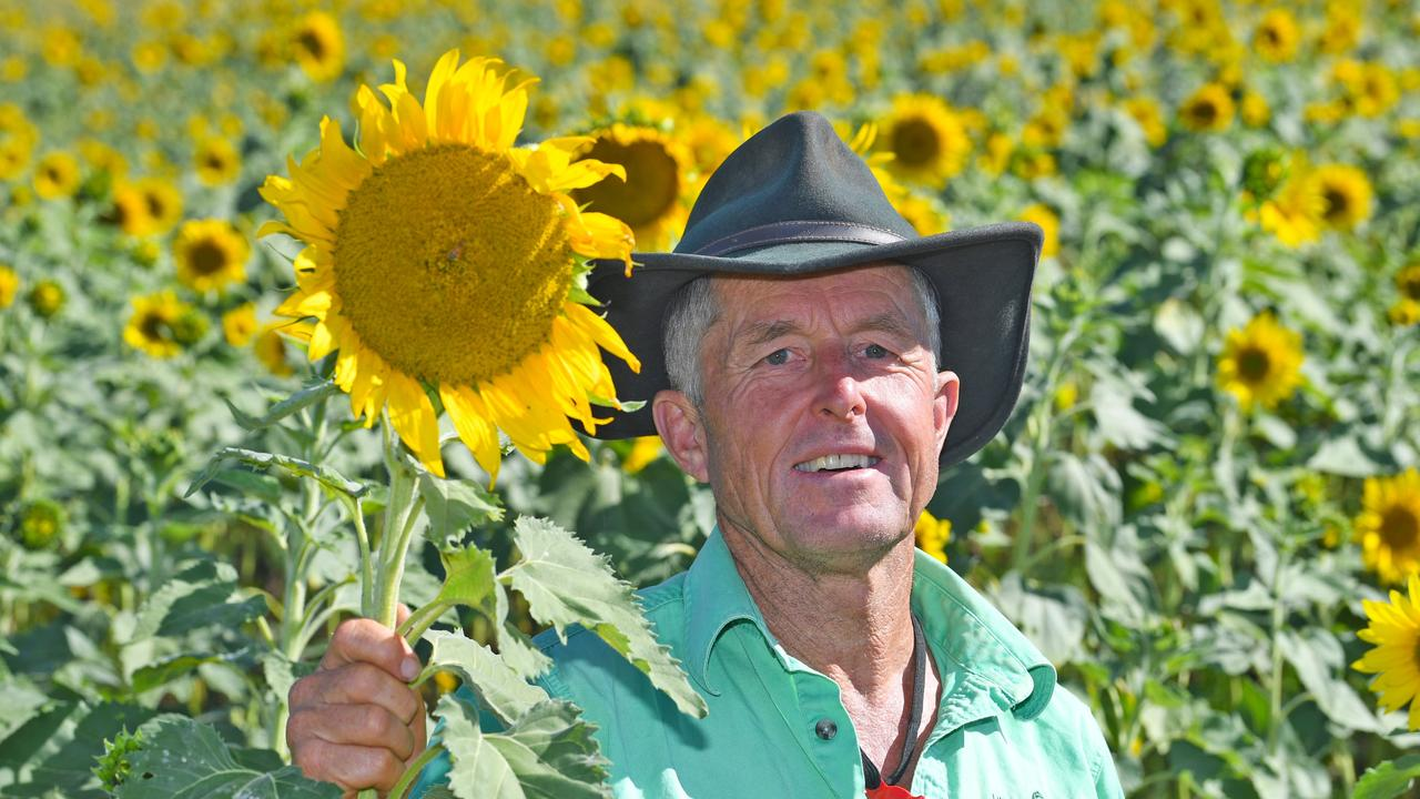 John Tidy with his crop of beautiful sunflowers – Picture: Shane Zahner