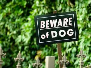 Woman and baby attacked by roaming dogs