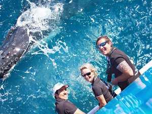 Whale whisperer ready for humpbacks to return