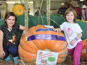 Good gourd! The giant pumpkins have returned