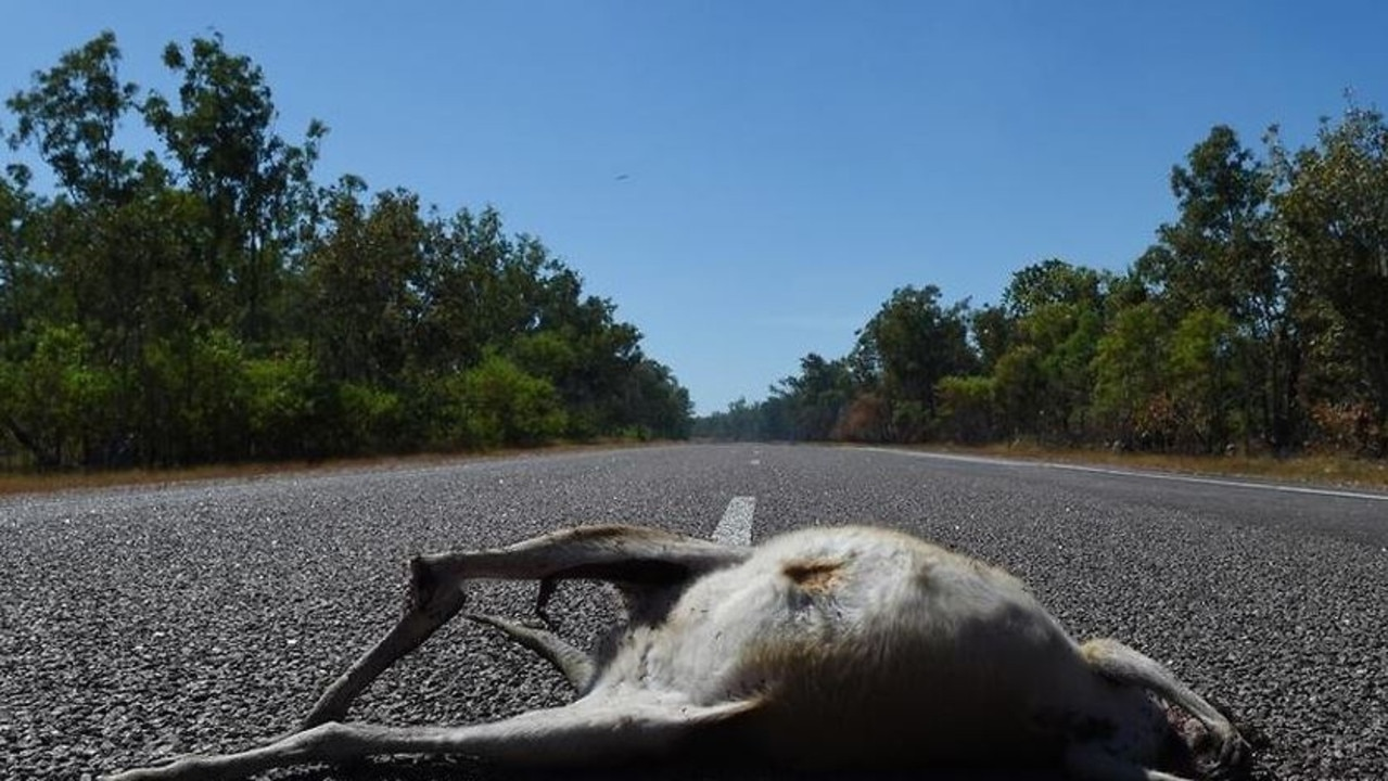 An animal killed after being hit by a vehicle. Picture: supplied