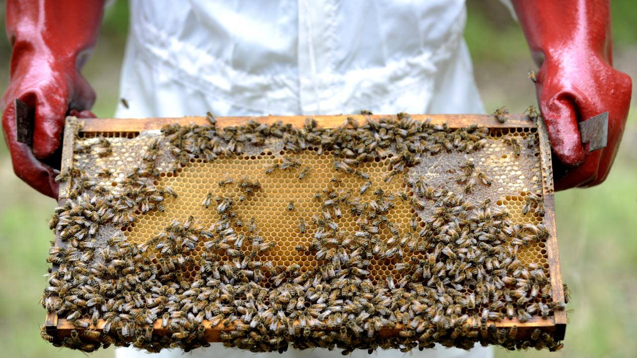 Beekeepers would also be able to access up to $75,000 in grants for clean-up and business reinstatement activities to help native bees recover after a devastating period of drought and bushfires, Mr Littleproud said,